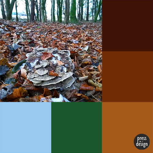 Tuesday Colour Inspiration: Fungi