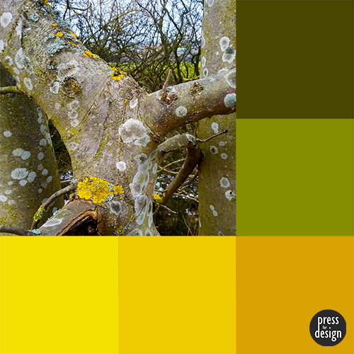 Lichen colour inspiration swatch