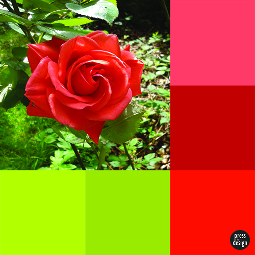 Tuesday Colour Inspiration – Red Rose